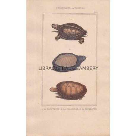 Gravure de Chéloniens ou tortues, Pl 5 - 1La Raboteuse - 2 La Chagrinée - 3 La Roussâtre