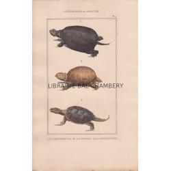 Gravure de Chéloniens ou tortues, C2 - 1La Bourbeuse - 2 La Ronde - 3 La Serpentine