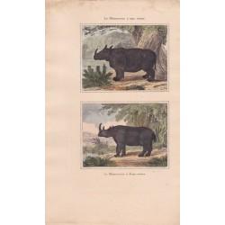 Gravure de Quadrupèdes, Pl  - 1 Le Rhinoceros à une corne - 2 Le  Rhinoceros à deux cornes