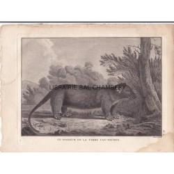"Gravure n° 8  -"" Un opossum de la Terre de Van-Diemen "" - A Voyage to the Pacific Ocean [Third Voyage]"